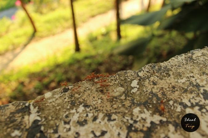 Природа Пхукета