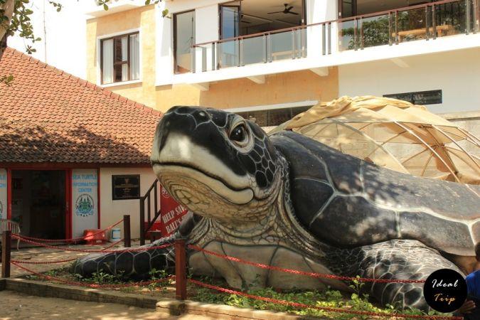 Большая черепаха возле пляжа Кута