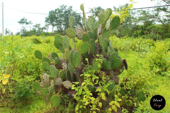 Растения вокруг острова Гили Мено