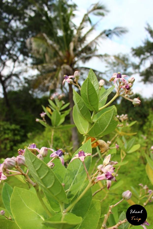 Растение на острове Гили