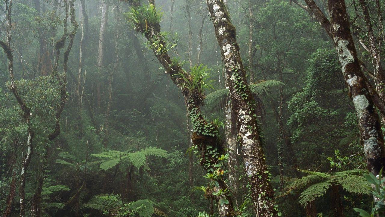 Национальный парк Борнео