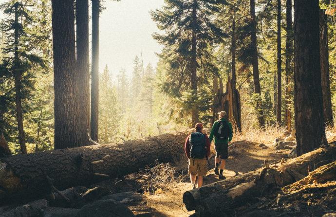 Путешественники в лесу