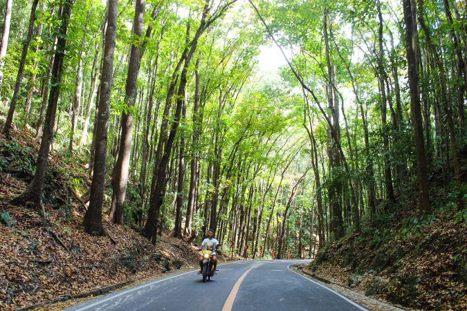 Рукотворный лес