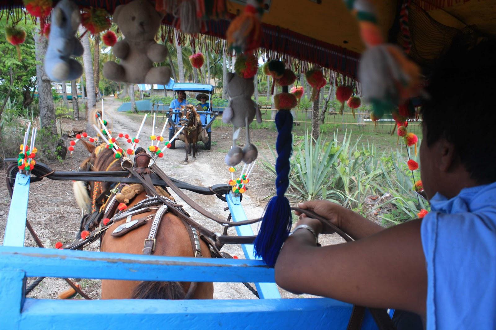 Лошадиное такси на острове Гили Эйр