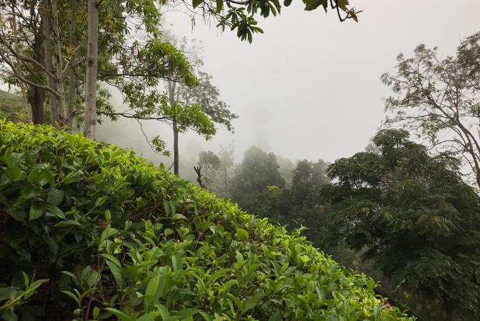 Малый пик Адама на Шри Ланке