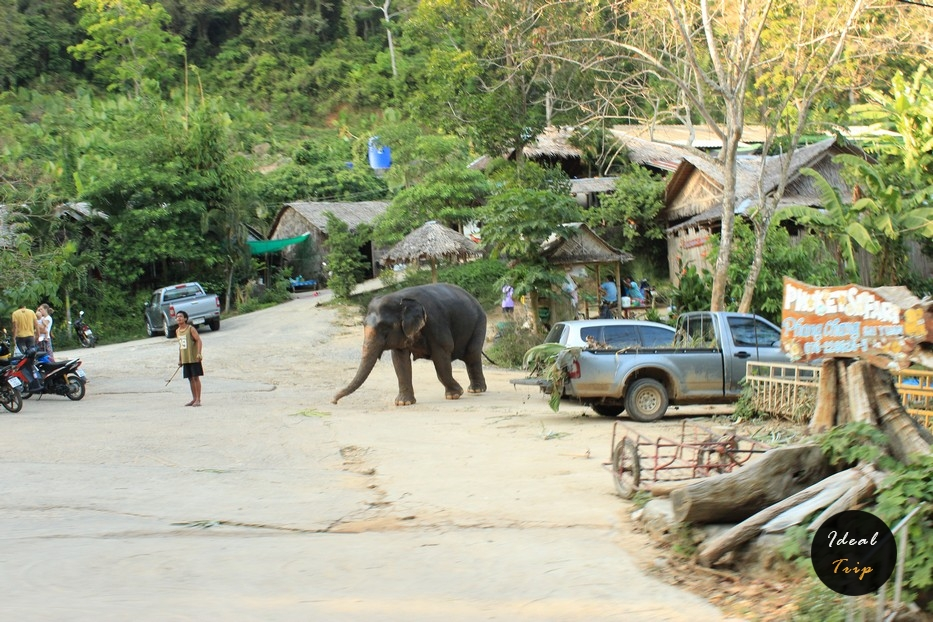 Слон в деревне