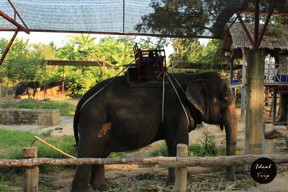Слон с седлом
