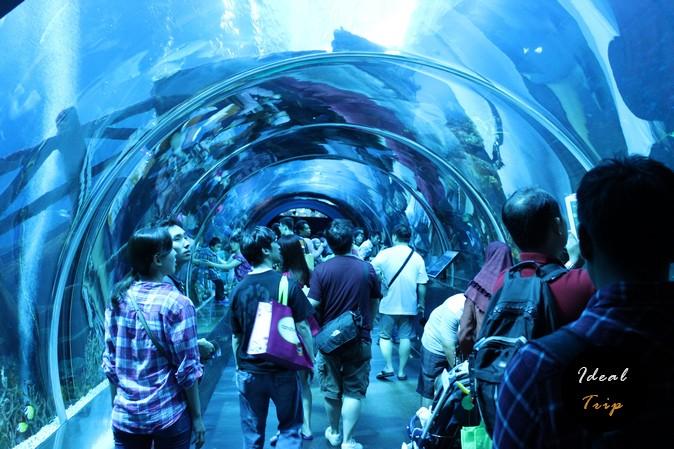 Тоннель в океанариуме Сингапура