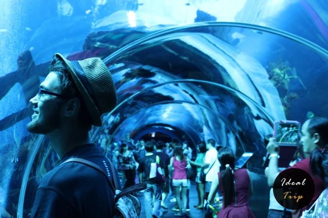 Станислав Матвеев в океанариуме Сингапура