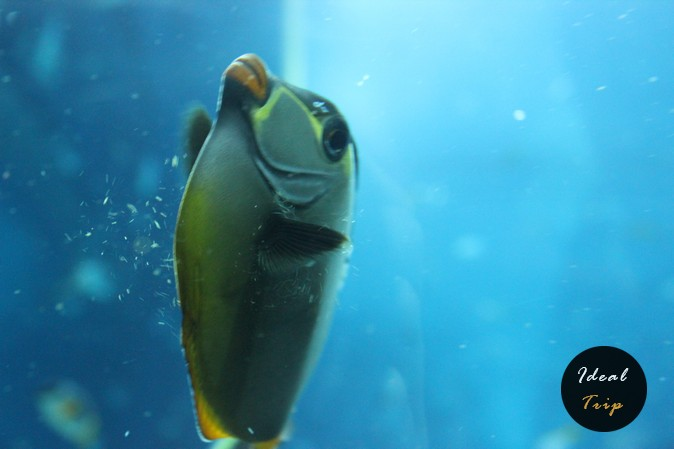 Рыбка в океанариуме Сингапура