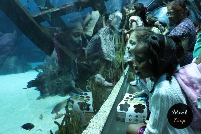Дети в океанариуме Сингапура