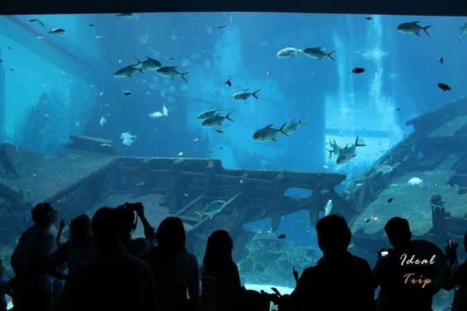 Аквариум в океанариуме Сингапура
