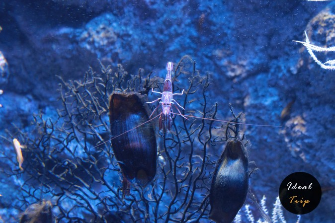 Подводные жители в океанариуме Сингапура
