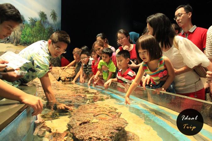 Китайцы в океанариуме Сингапура