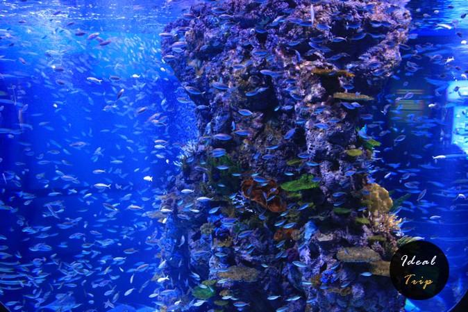 Маленькие рыбки в океанариуме Сингапура