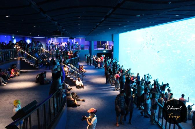 Туристы в океанариуме Сингапура на Сентозе