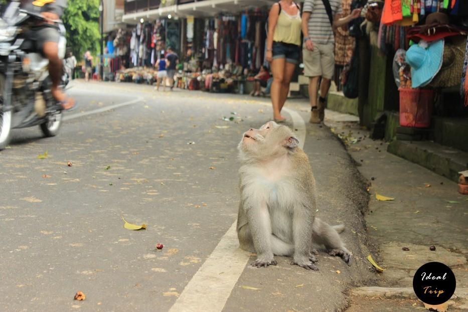 Обезьяна на Бали