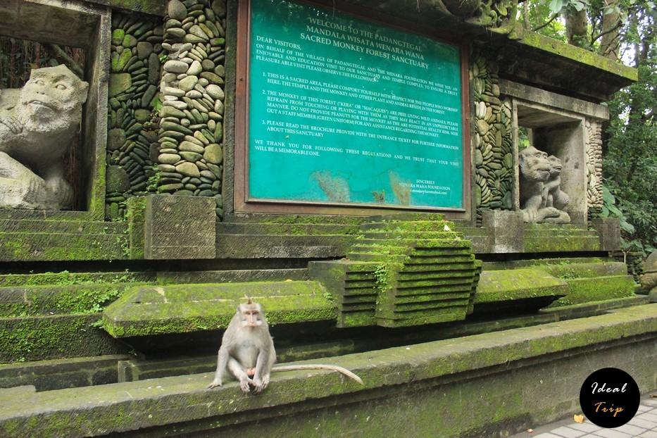 Символ Бали - обезьяна
