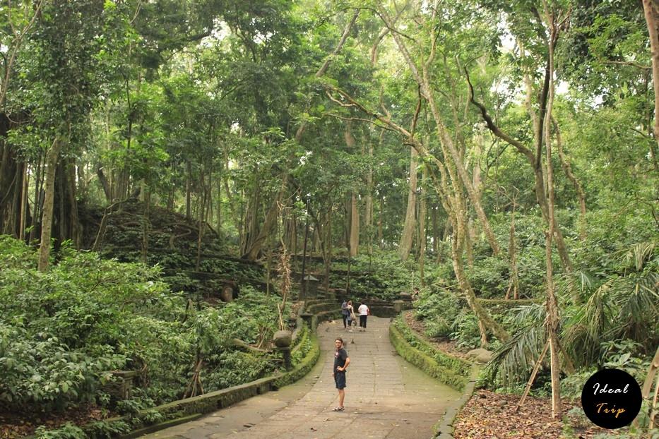 Вход в лес обезьян