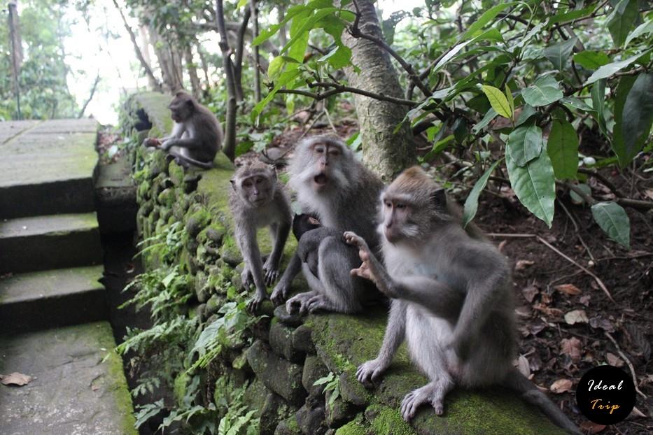 Забавные обезьянки на Бали