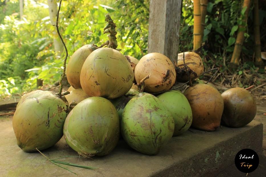 Зеленый кокосы