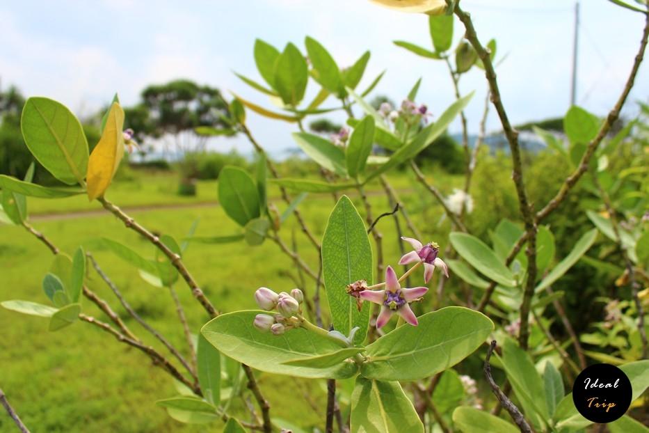 Растительность вокруг острова Гили Мено