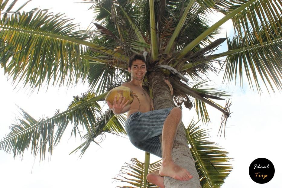 Станислав Матвеев на пальме