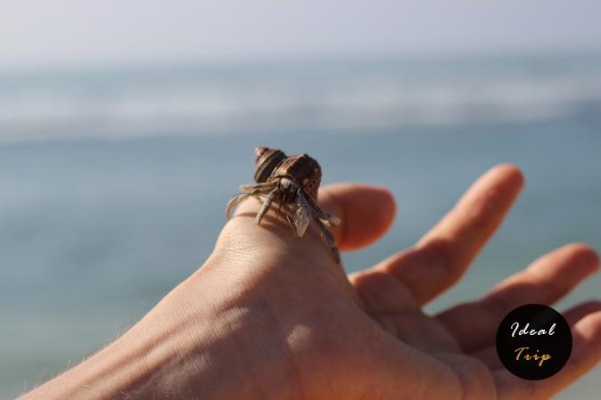 Животное на руке