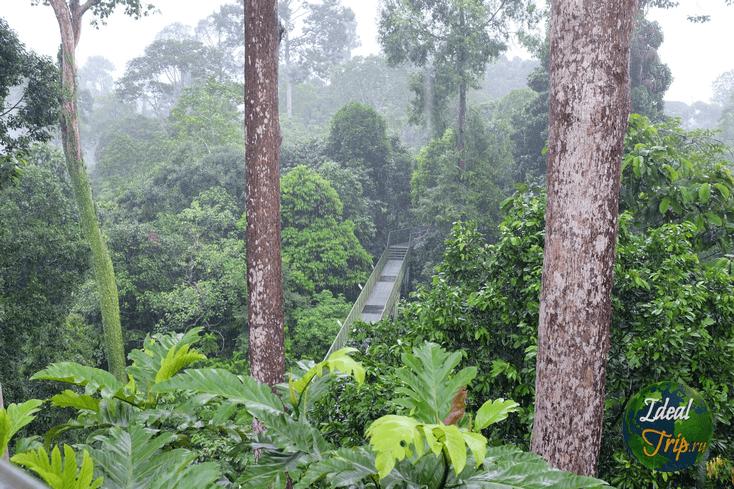 Rainforest DC, о. Борнео