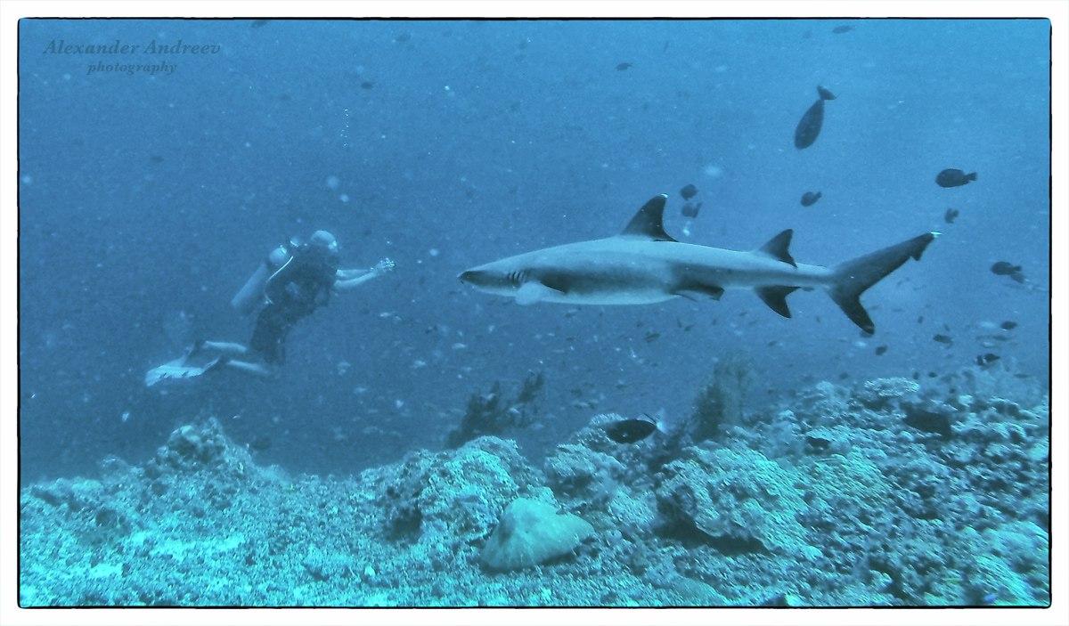Подводный мир острова Сипадан