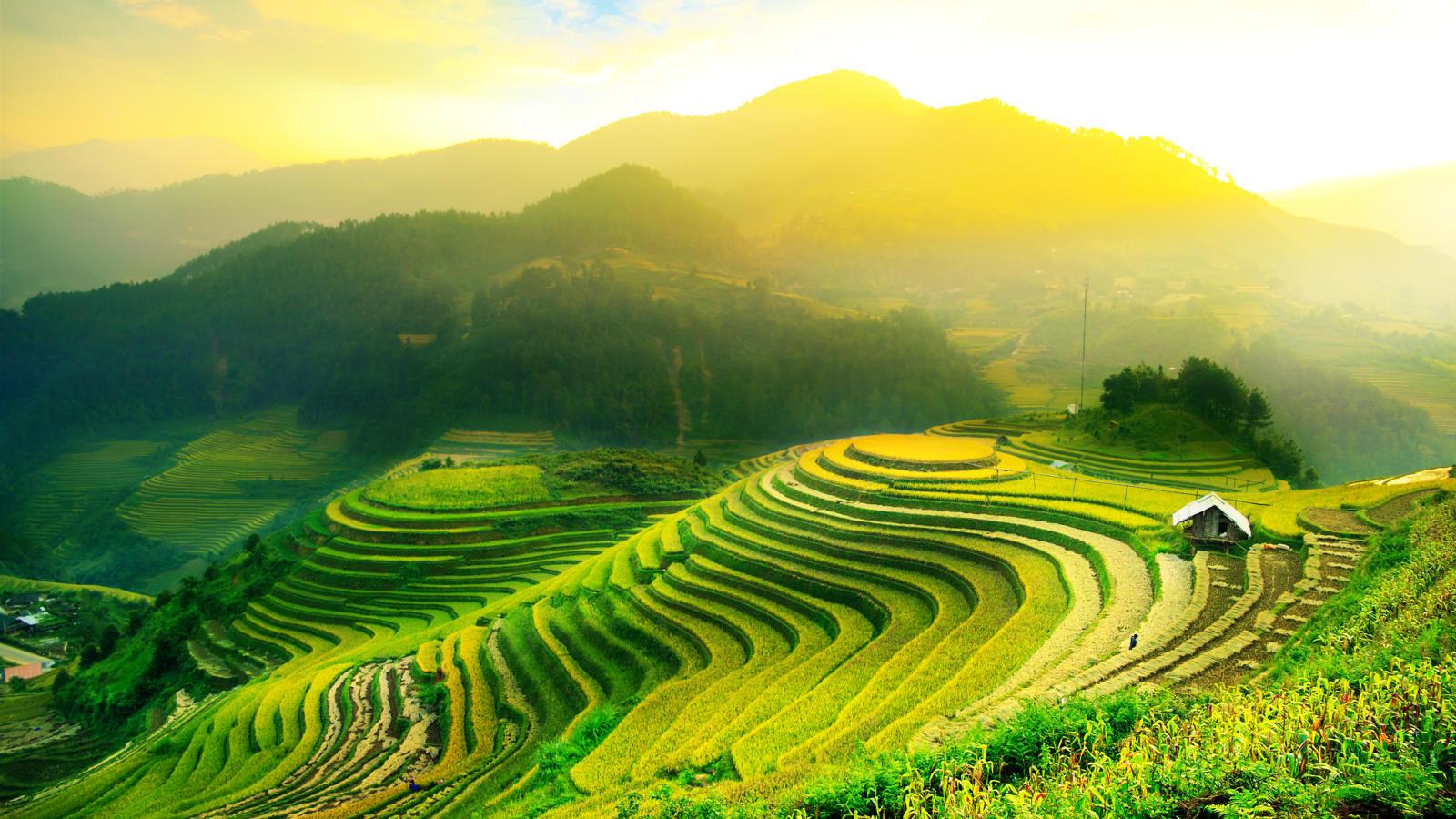 Рисовые поля на острове Бали