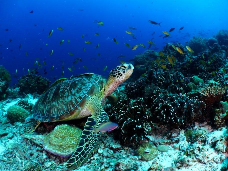 Подводный мир на острове Баликасаг