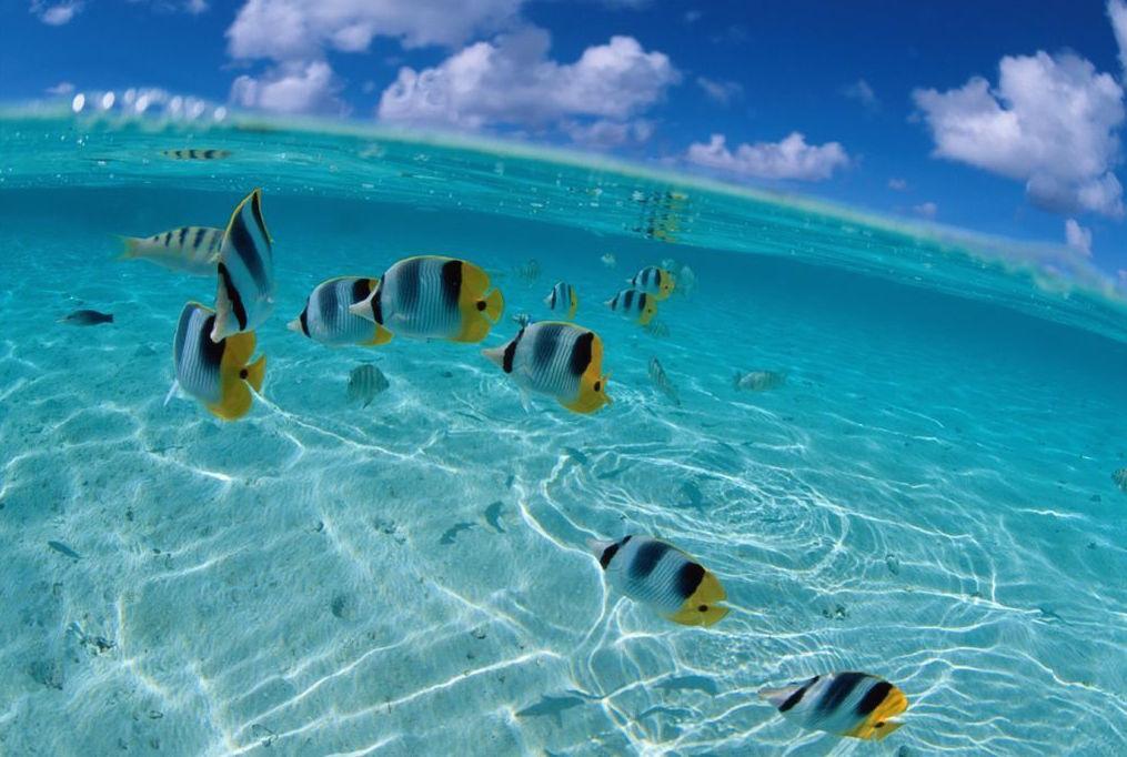 Рыбки в океане