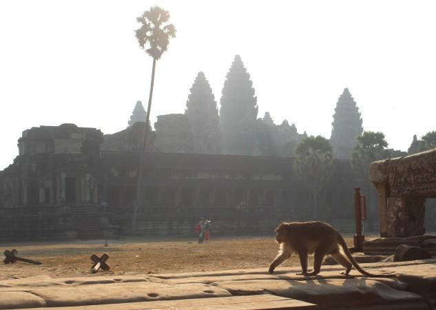 Возле Ангкор Ват водятся обезьяны