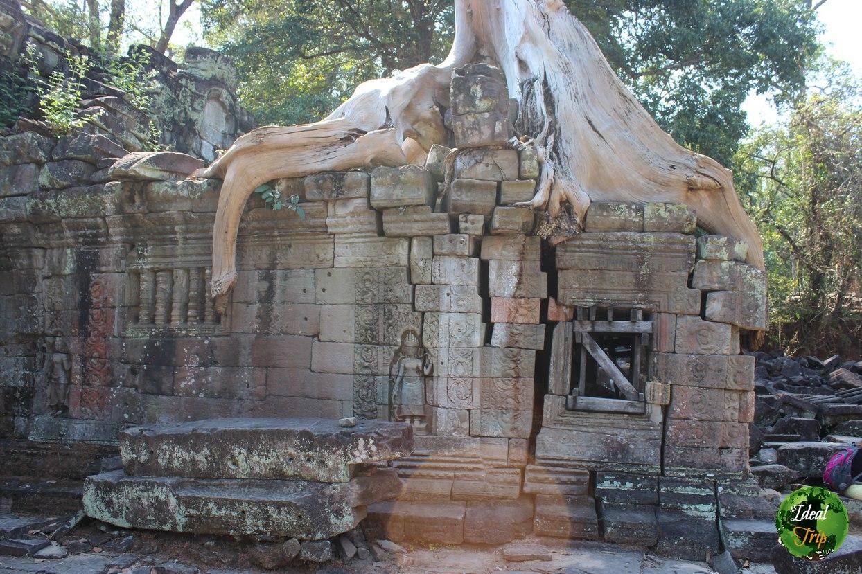 Дерево разрушает построение