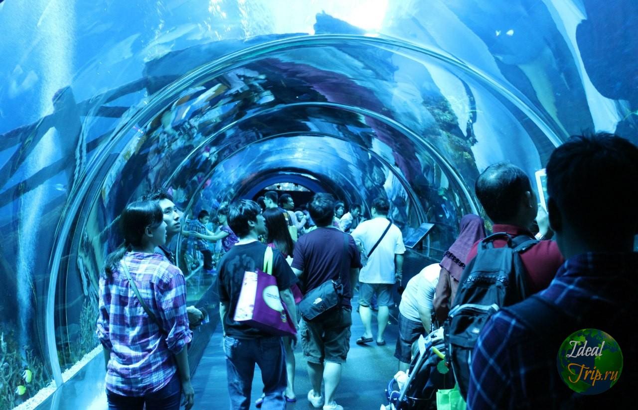 Океанариум Подводное царство