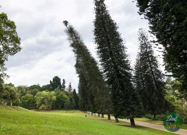 Ботанический сад Канди на Шри Ланке