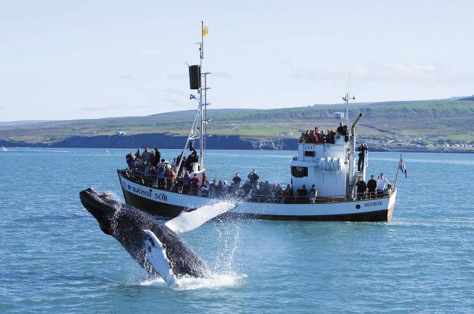 Группа наблюдает за китом