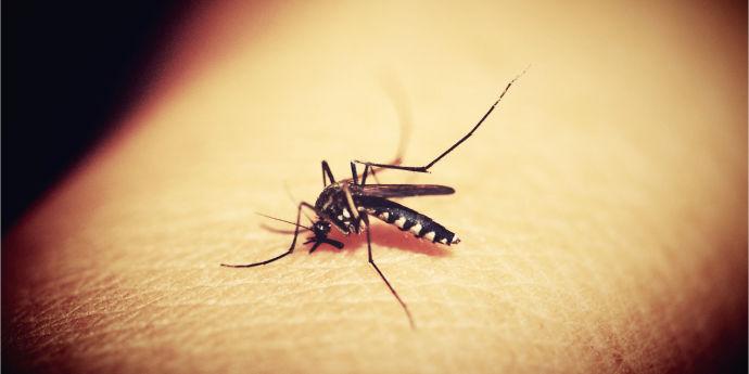 Вьетнамский комар