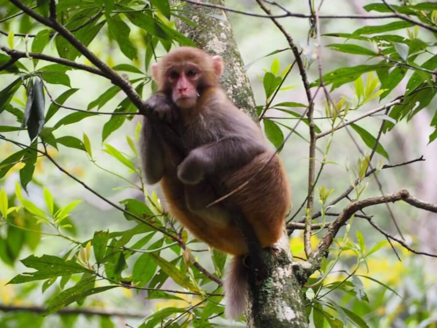 обезьянка в Национальном парке Чжанцзяцзе